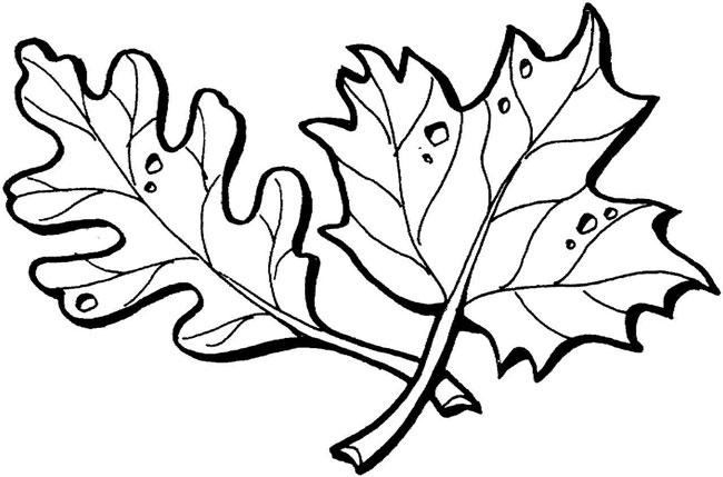 儿童简笔画图片 枫叶